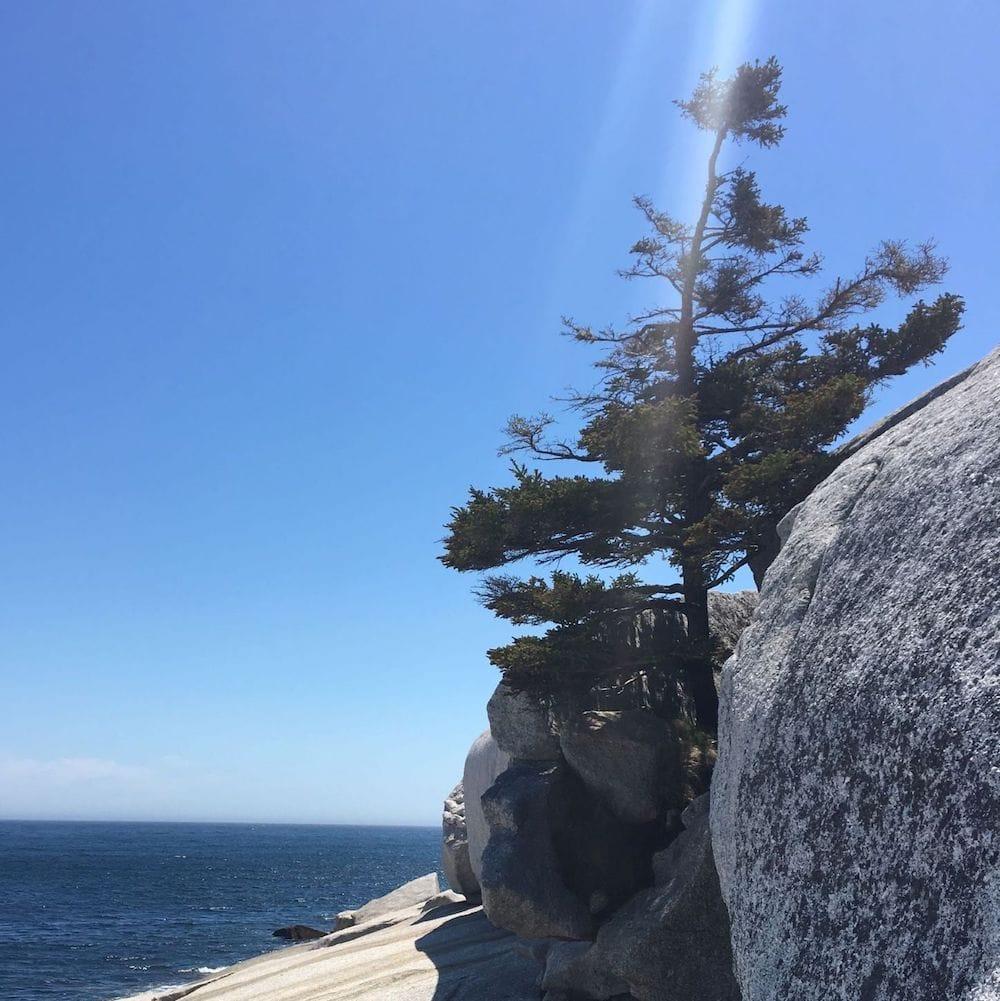 Rock ocean tree square