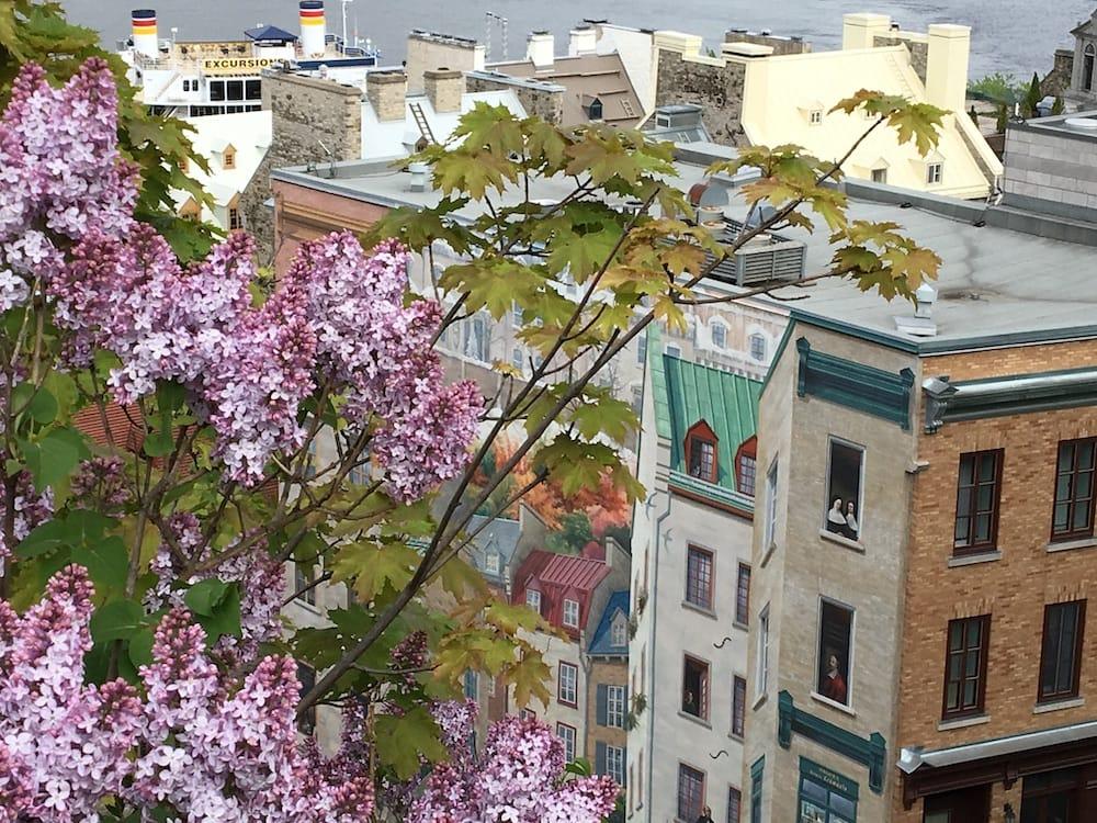 Quebec City Flowers