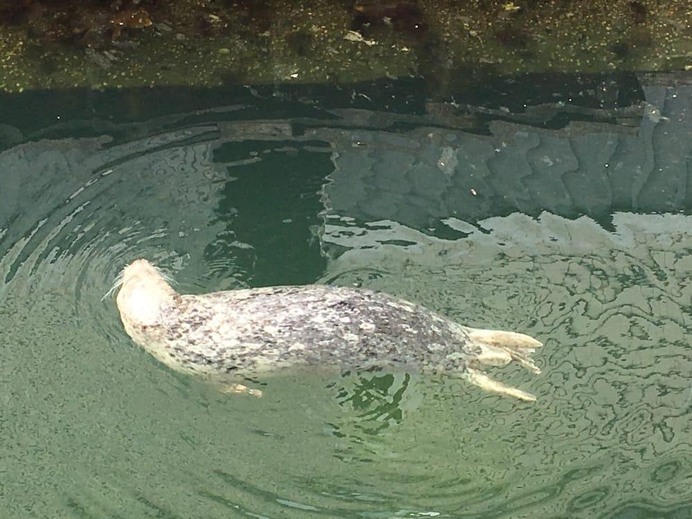 Seal Victoria