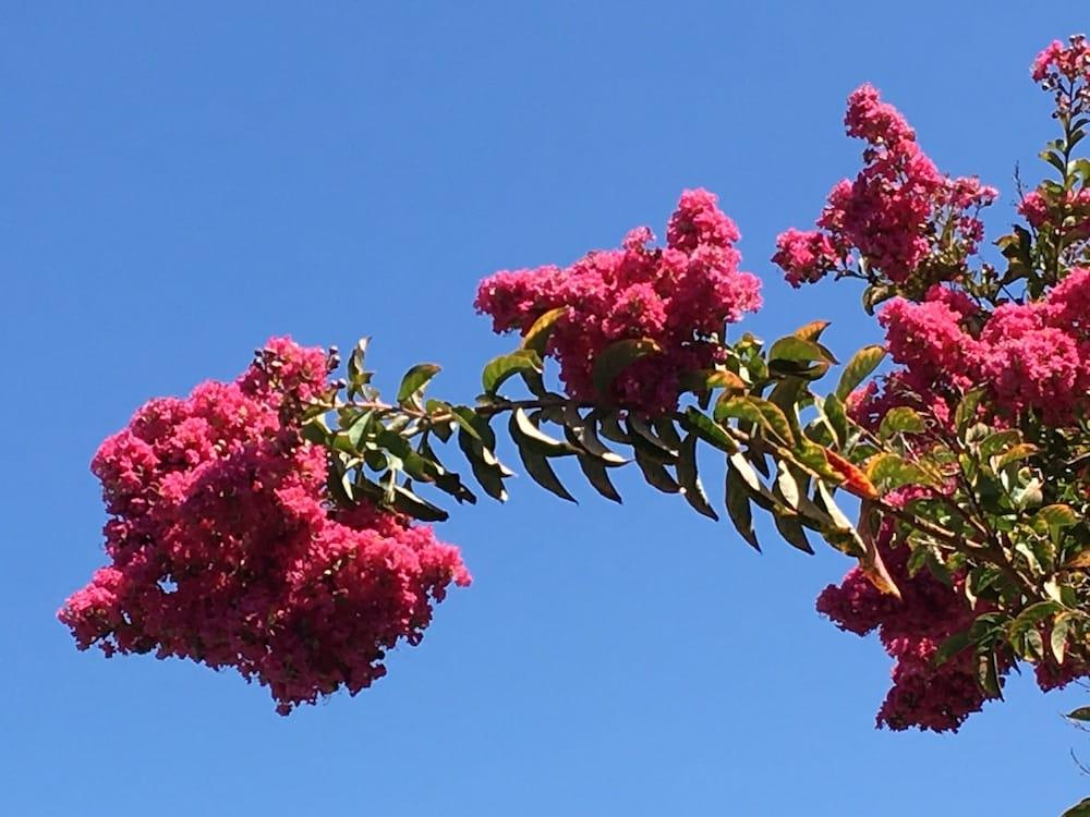 Sonoma Valley blossom